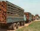 Việt Nam sử dụng bao nhiêu gỗ có nguồn gốc từ Campuchia, Lào?