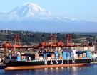 Đại gia vận tải biển phá sản, đại diện tại Việt Nam dừng nhận hàng