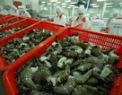 Thủy sản xuất khẩu nhiễm kháng sinh bị trả về cho tiêu thụ trong nước