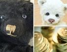 Rao bán gấu bông với giá hơn 80 triệu đồng