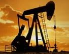 Giá dầu có thể chạm 18 USD/thùng do căng thẳng ở Trung Đông