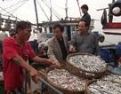 Ngư dân bội thu cá cơm trong chuyến ra khơi đầu năm
