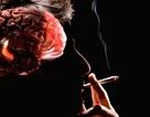 Hút thuốc lá làm mòn vỏ não