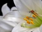 Lây truyền sốt xuất huyết vì lọ hoa, cây cảnh đầy rẫy bọ gậy sinh muỗi