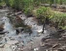 Đề nghị nâng cao mức phạt hành vi phá hoại môi trường