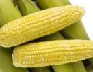 Thực phẩm biến đổi gen có thực sự an toàn?