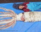 Bắt được mực ống khổng lồ nặng 160 kg ngoài khơi Nhật Bản