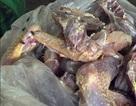 Phát hiện 120kg thịt gà thối trong tủ lạnh quán cơm