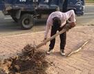 Nhổ sạch hàng cây chết khô bên cầu Nhật Tân