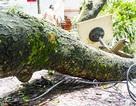 Hà Nội: Cành cây lớn bất ngờ rơi trúng nhà hàng