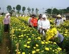 Ghé làng hoa nức tiếng đất Hà thành
