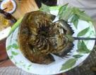 Về Quảng Yên thưởng thức vị sam biển