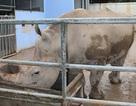 Về An Khánh khám phá Tê giác trắng