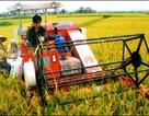 Vốn ngoại quay lưng với nông nghiệp Việt Nam