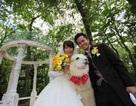 """Dịch vụ """"lạ"""": Nhờ lạc đà làm giám chứng cho hôn lễ"""