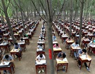 Trường học tổ chức thi cuối kỳ... trong rừng để tránh nóng