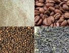 Điểm yếu cốt tử của nông sản Việt Nam là chất lượng thấp