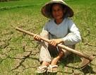Hạn hán ở Nam Trung Bộ gay gắt nhất trong 40 năm qua