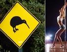 """Cột biển báo giao thông trở thành """"công cụ"""" của gái mại dâm"""