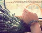 Provence – Nhật ký hoa và cỏ