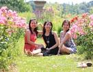 Lãng mạn nữ sinh Việt tạo dáng bên vườn hồng
