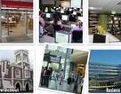 Auckland University – cơ hội học bổng và việc làm sau tốt nghiệp