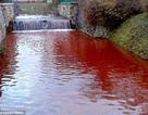 """Chuyện có thật về một """"dòng sông máu"""""""