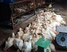 Nhiều chủng cúm nguy hiểm đang áp sát, tung hoành ở Việt Nam
