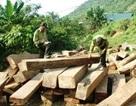 Hai cán bộ bảo vệ rừng bị lâm tặc chém trọng thương