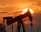 Giá dầu giảm mạnh, Việt Nam vẫn tăng xuất khẩu gấp rưỡi