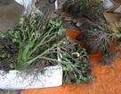 Thương lái thu gom nông sản lạ: Chưa phát hiện có yếu tố nước ngoài