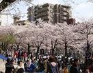 Phỏng vấn du học đảm bảo việc làm tại Nhật Bản