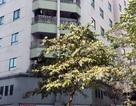 Hà Nội: Một phụ nữ rơi từ tầng 7 chung cư xuống đất