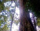 Tiếng kêu cứu từ rừng xanh!