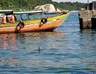 Cá heo bất ngờ xuất hiện tại Cù Lao Chàm