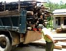 Doanh nghiệp buôn gỗ lậu bị phạt 300 triệu đồng