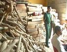 Phát hiện kho chứa hơn 100m3 gỗ quý chưa rõ nguồn gốc