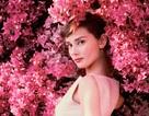 Triển lãm hình ảnh hiếm có của huyền thoại Audrey Hepburn