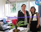 Hội thảo du học Thụy Sĩ, Đại học IMI, học bổng, cơ hội việc làm