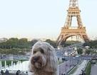 """Cuộc sống """"sang chảnh"""" của cô chó ngao du khắp thế giới"""