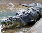 Cá sấu nuốt chửng vợ và đứa con trong bụng, người chồng lấy mạng đền mạng