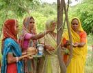 Kỳ lạ ngôi làng cứ mỗi bé gái ra đời lại trồng 111 cây xanh