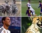 Trailer đặc sắc trận chung kết Champions League giữa Barca và Juventus