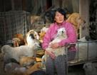 Chi hơn 1000 đô la để cứu 100 chú chó từ lễ hội thịt chó