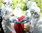 Hơn 7.100 con gia cầm chết vì cúm A/H5N1