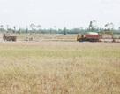 """""""Nóng"""" chuyện khai thác đất mặt ruộng ở Sóc Trăng"""