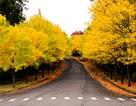 Mùa thu nước Mỹ tuyệt đẹp qua ống kính chàng kỹ sư gốc Việt
