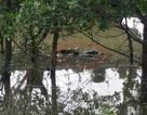 Thi thể người phụ nữ nổi trên sông Lam