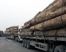 19 xe gỗ quá tải bị bắt, hơn 10 tài xế bỏ trốn