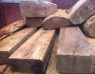 Bắt nhiều vụ vận chuyển gỗ lậu trước Tết Nguyên đán